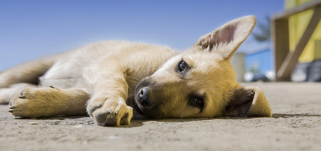 tafsir mimpi anak anjing