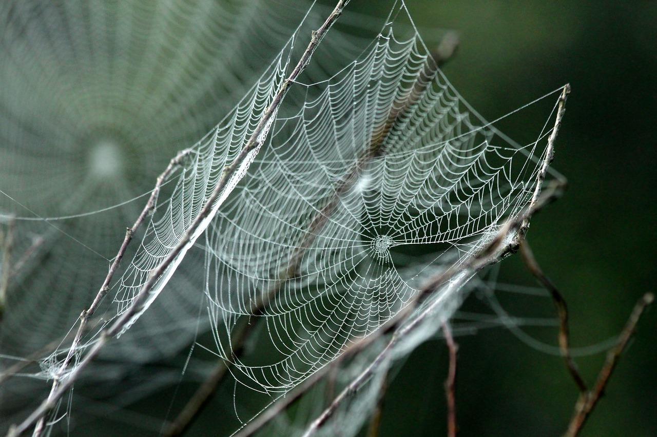 mimpi sarang laba-laba