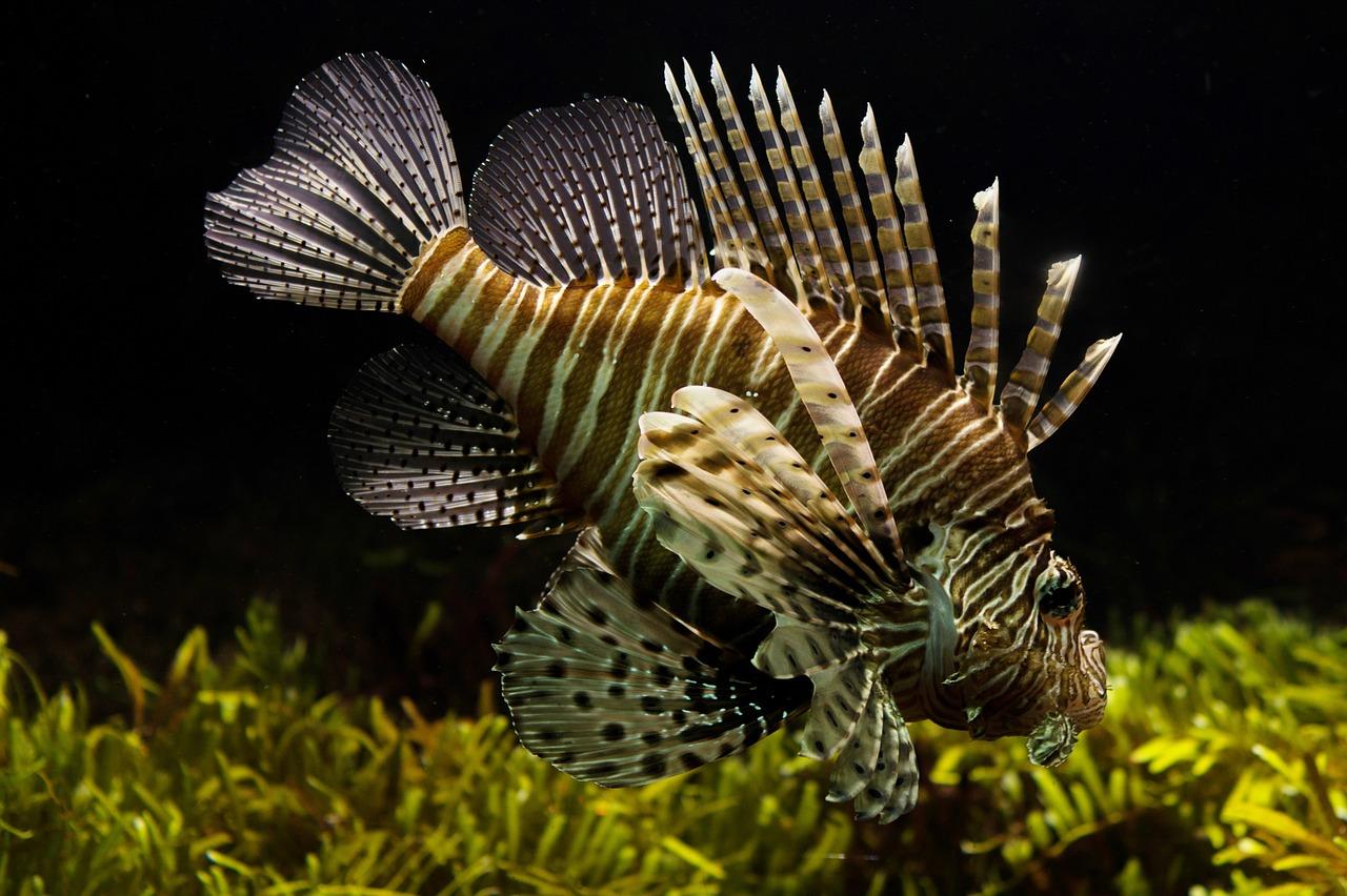 Arti Bermimpi Tentang Ikan