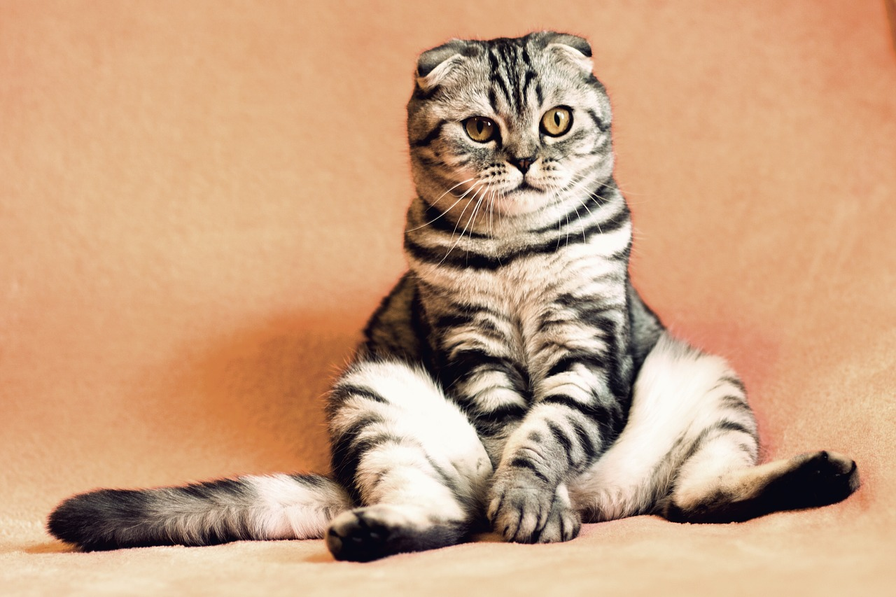 Apa Arti Mimpi Tentang Kucing?
