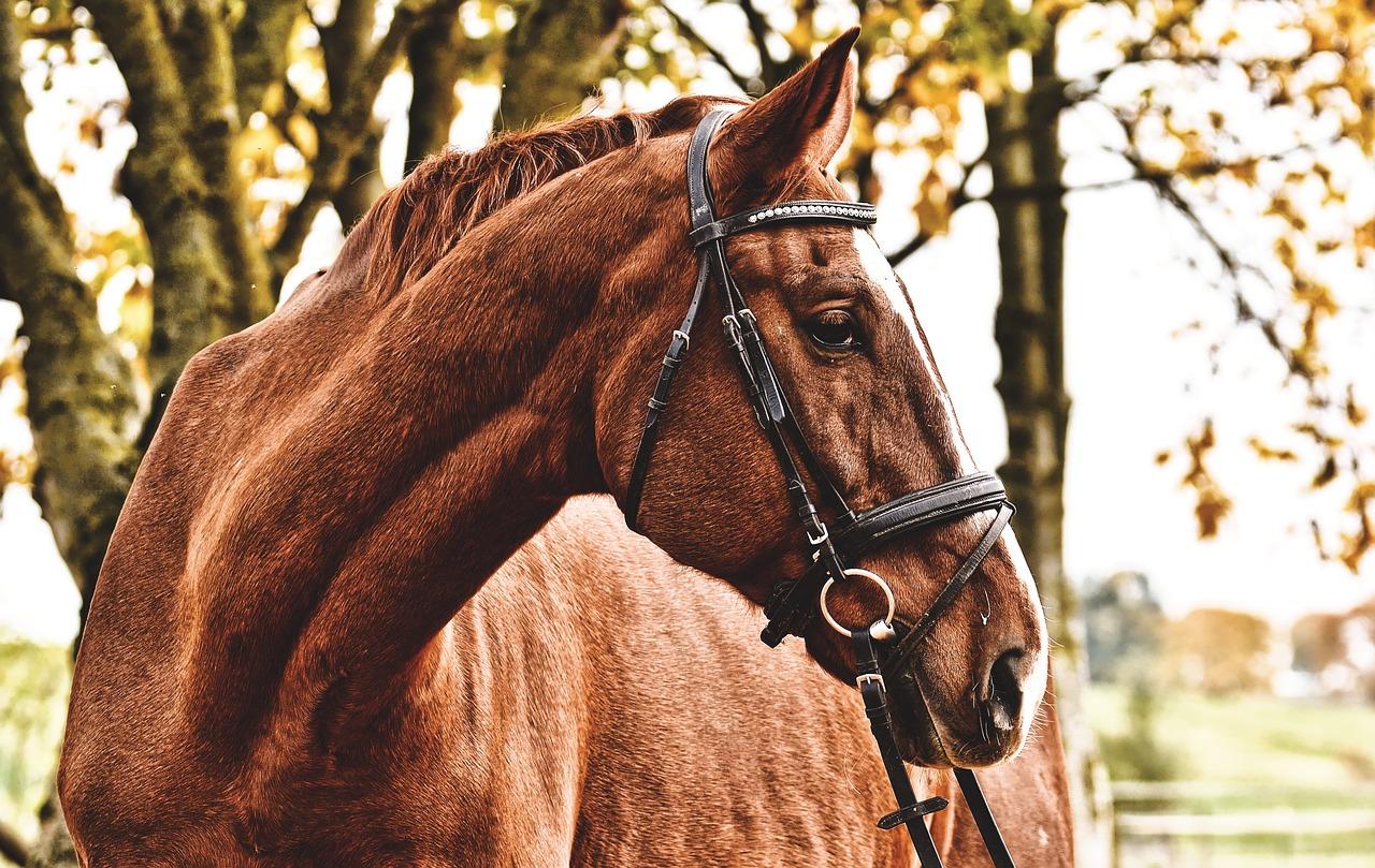 Apa Arti Mimpi Tentang Kuda?