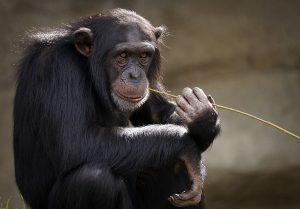 Apa Arti Bermimpi Monyet?