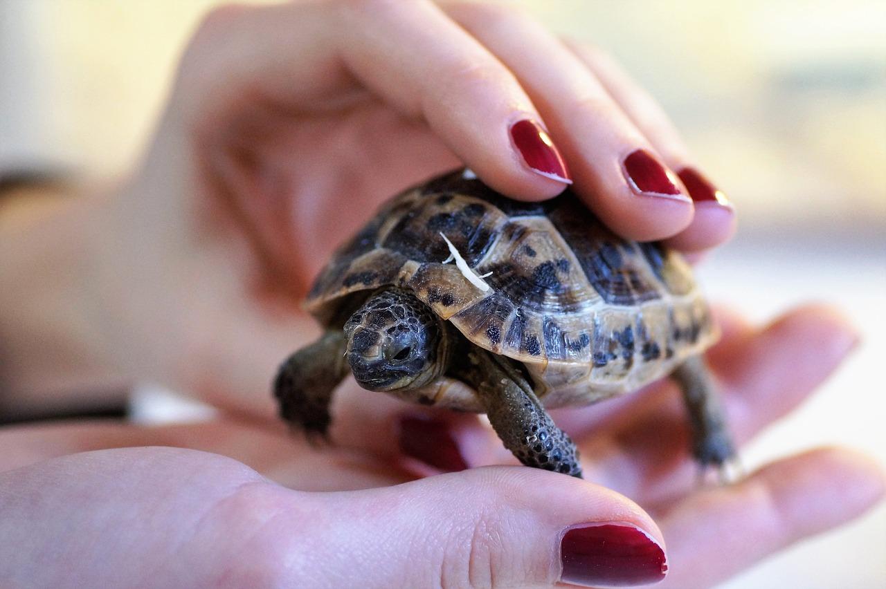 mimpi kura-kura
