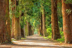 Apa Sebenarnya Arti Mimpi Tentang Pohon?