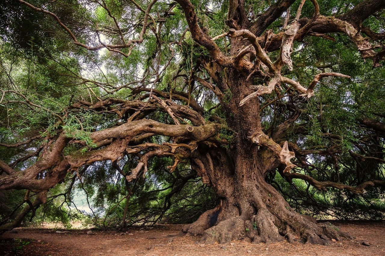 mimpi pohon