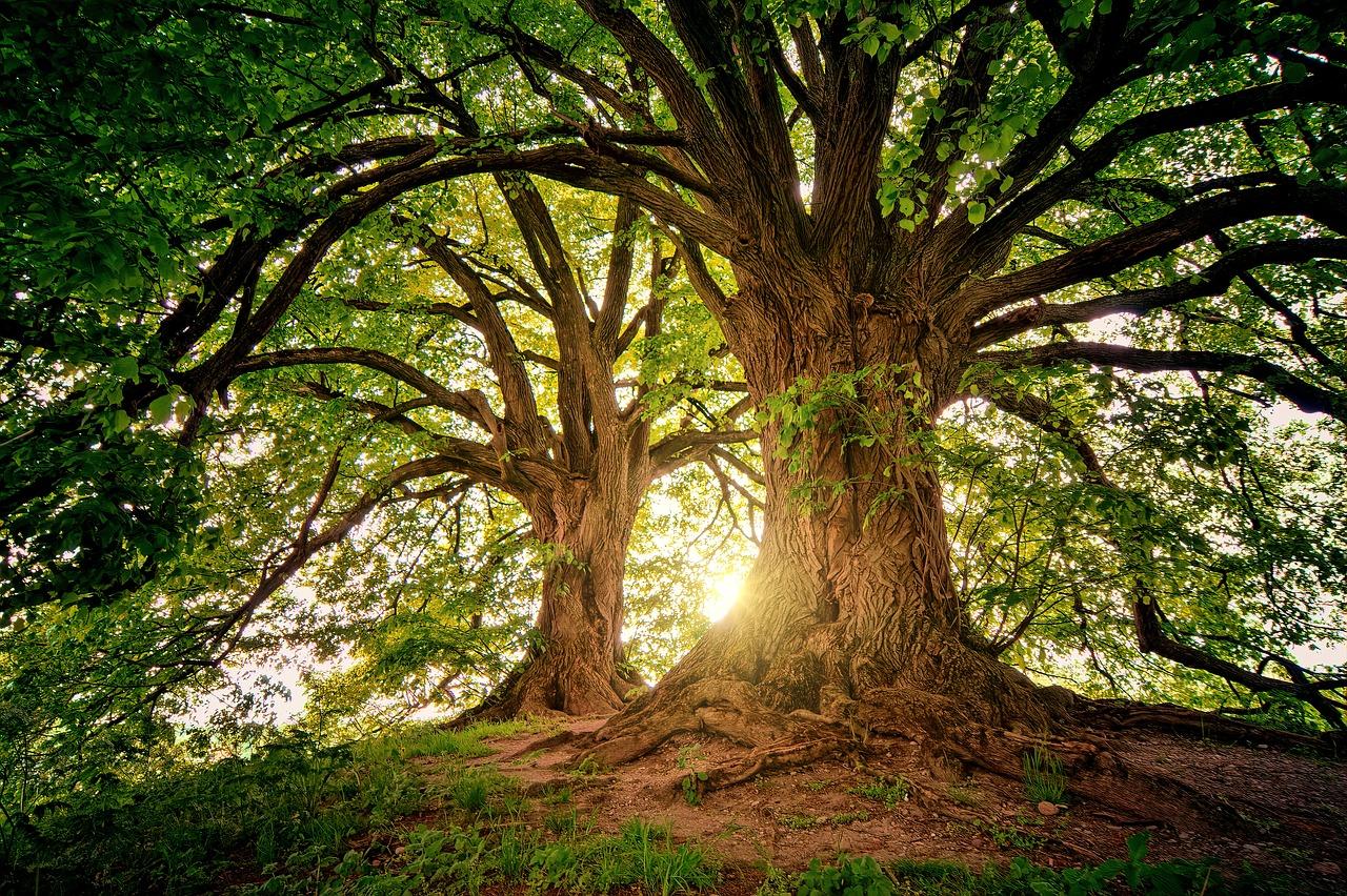 tafsir mimpi pohon