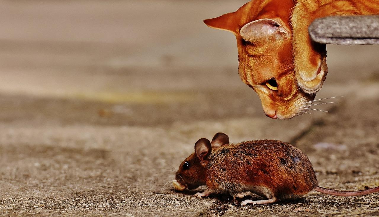 mimpi digigit tikus