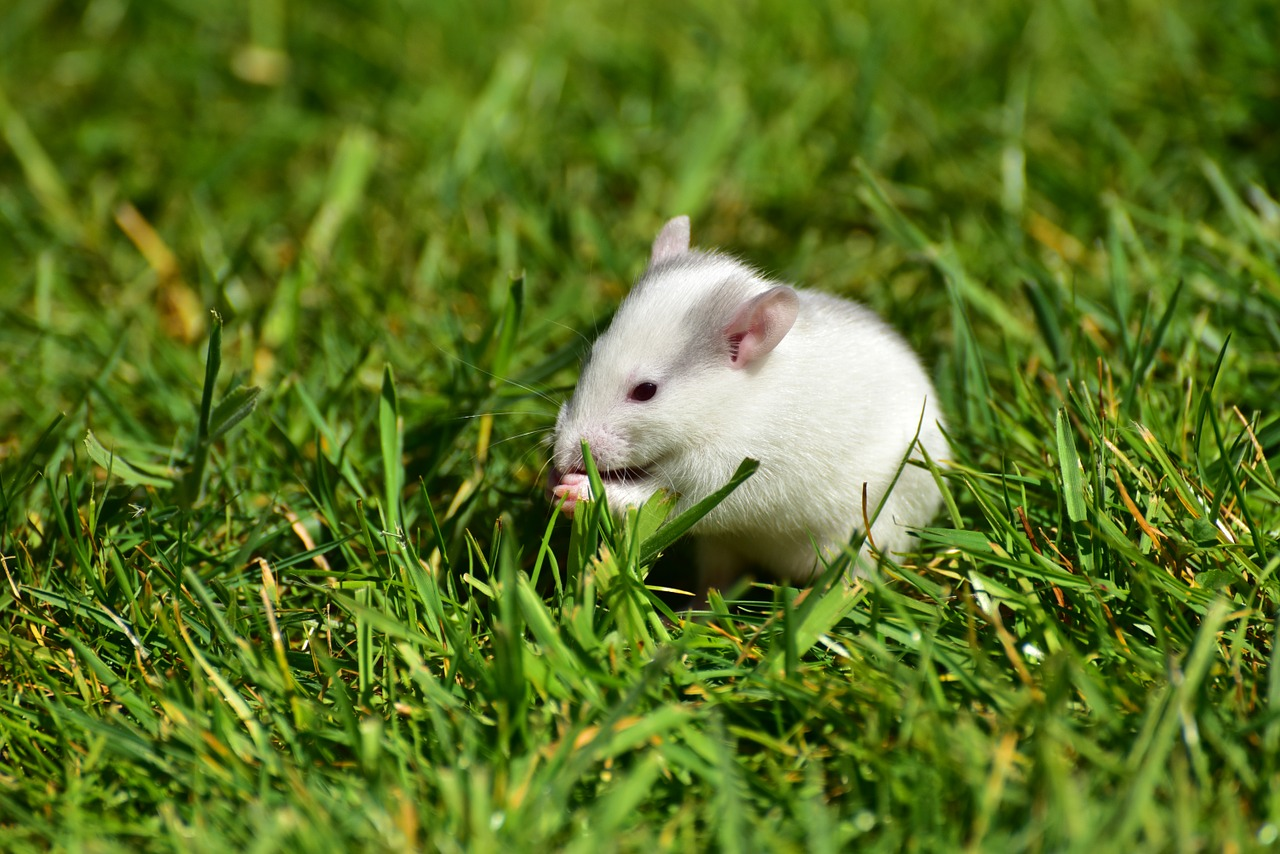 mimpi tikus putih