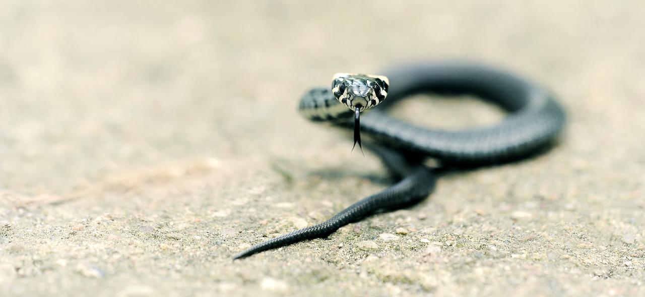 arti mimpi ular