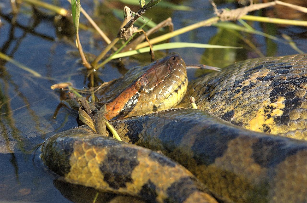 tafsir mimpi ular besar