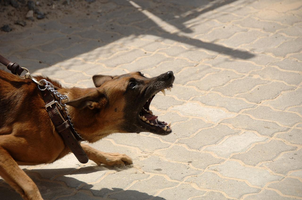 Apa arti mimpi tentang anjing yang marah?