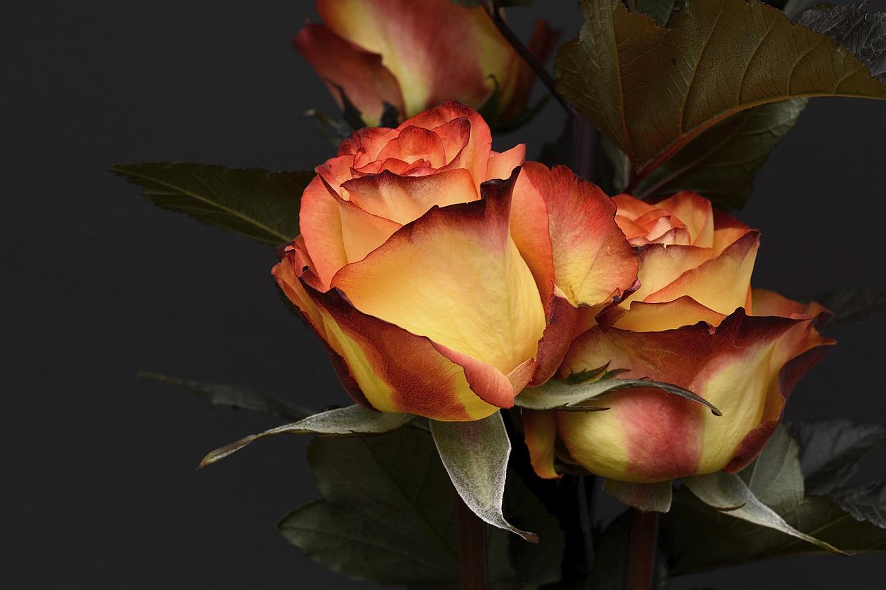Apa Arti Mimpi Bunga Aneka Warna?