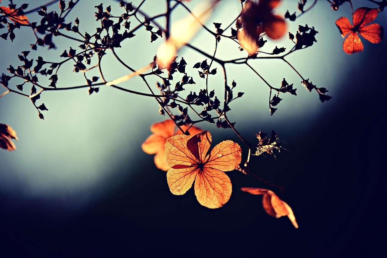 mimpi bunga bangkai