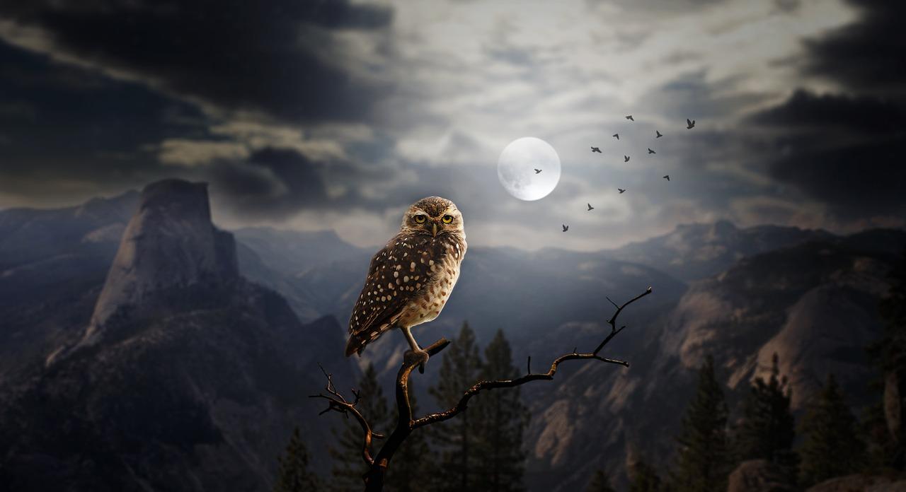 Apa Arti Mimpi Burung Hantu?