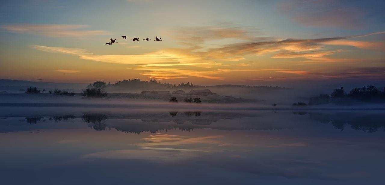 mimpi burung