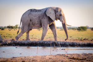 Apa Arti Mimpi Tentang Gajah?