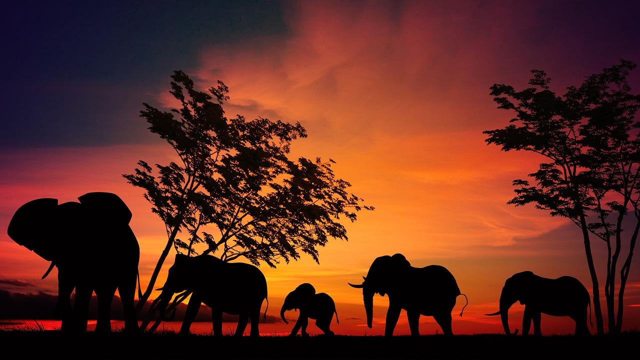 mimpi lihat gajah