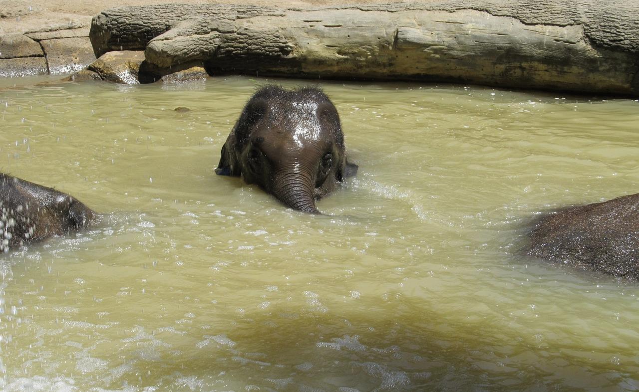 mimpi gajah terbang