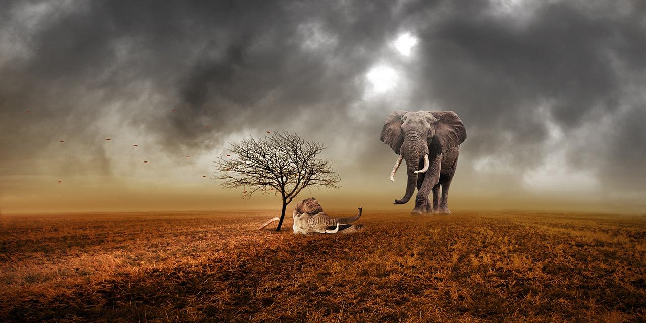 mimpi gajah mati