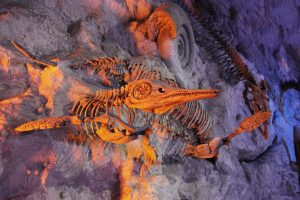 Apa arti mimpi ikan mati?