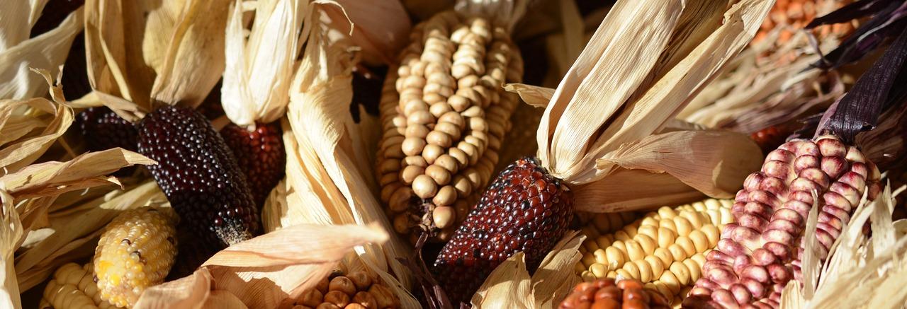 mimpi makan jagung