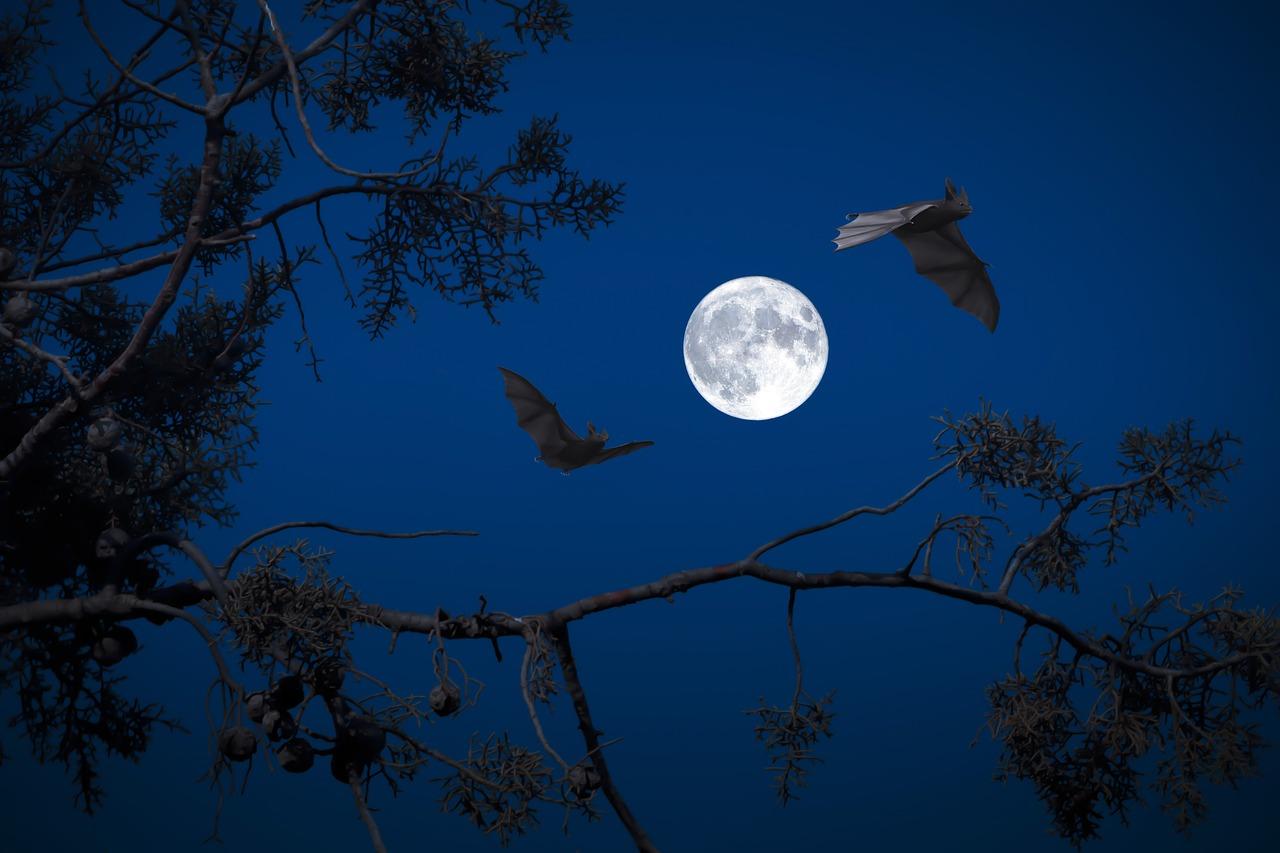 arti mimpi kelelawar