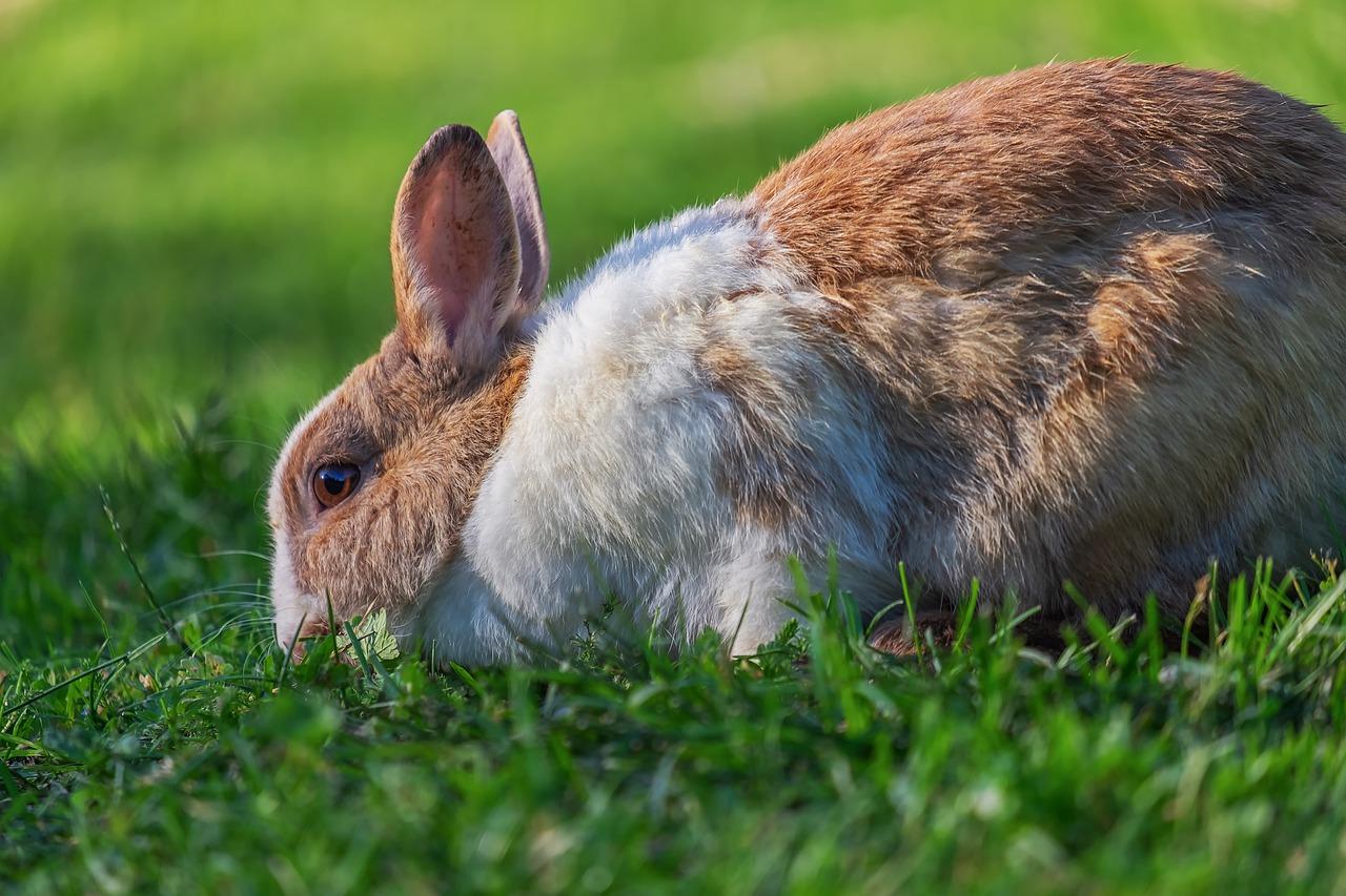 mimpi kelinci mati