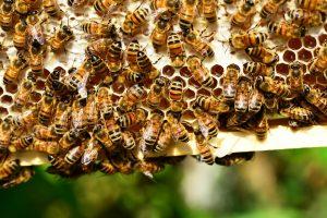 Apa Arti Mimpi Lebah Madu?