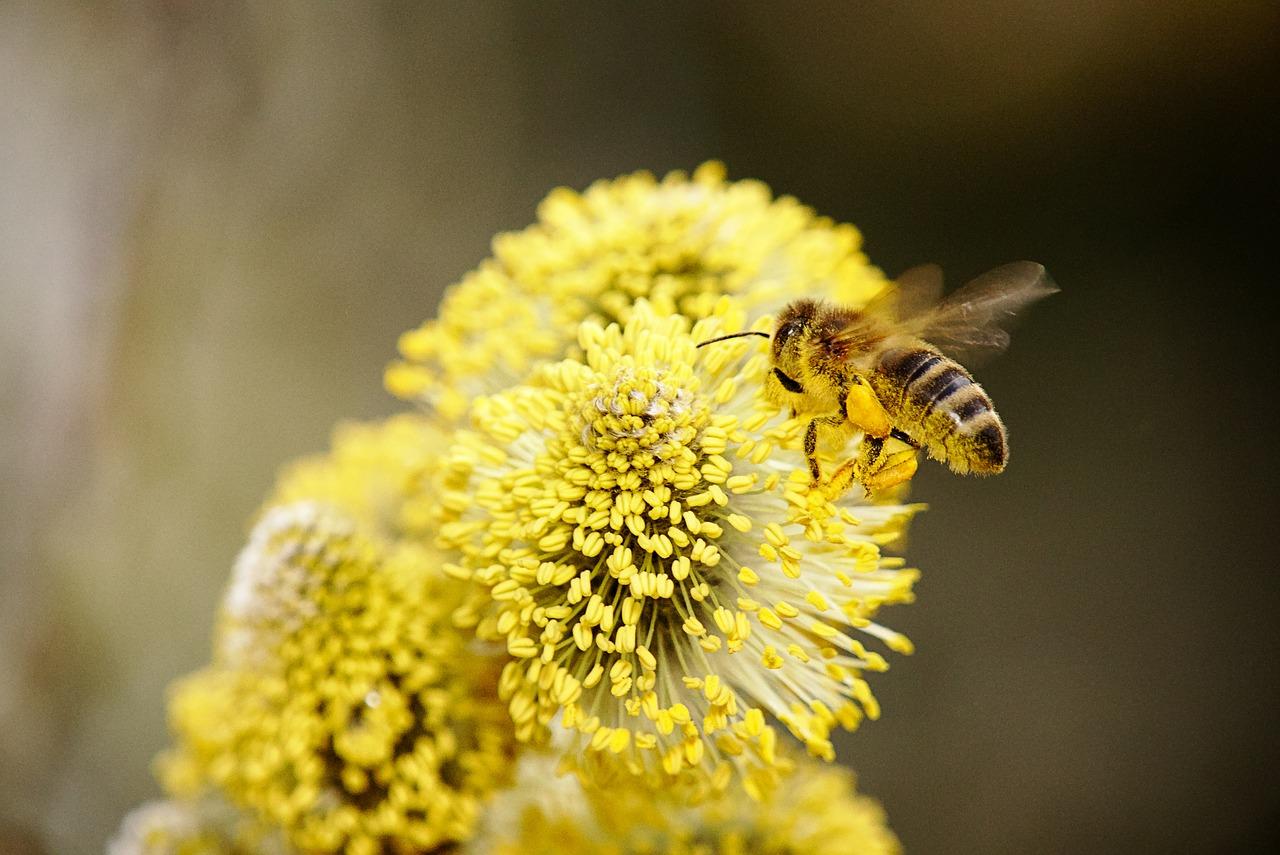 mimpi disengat lebah