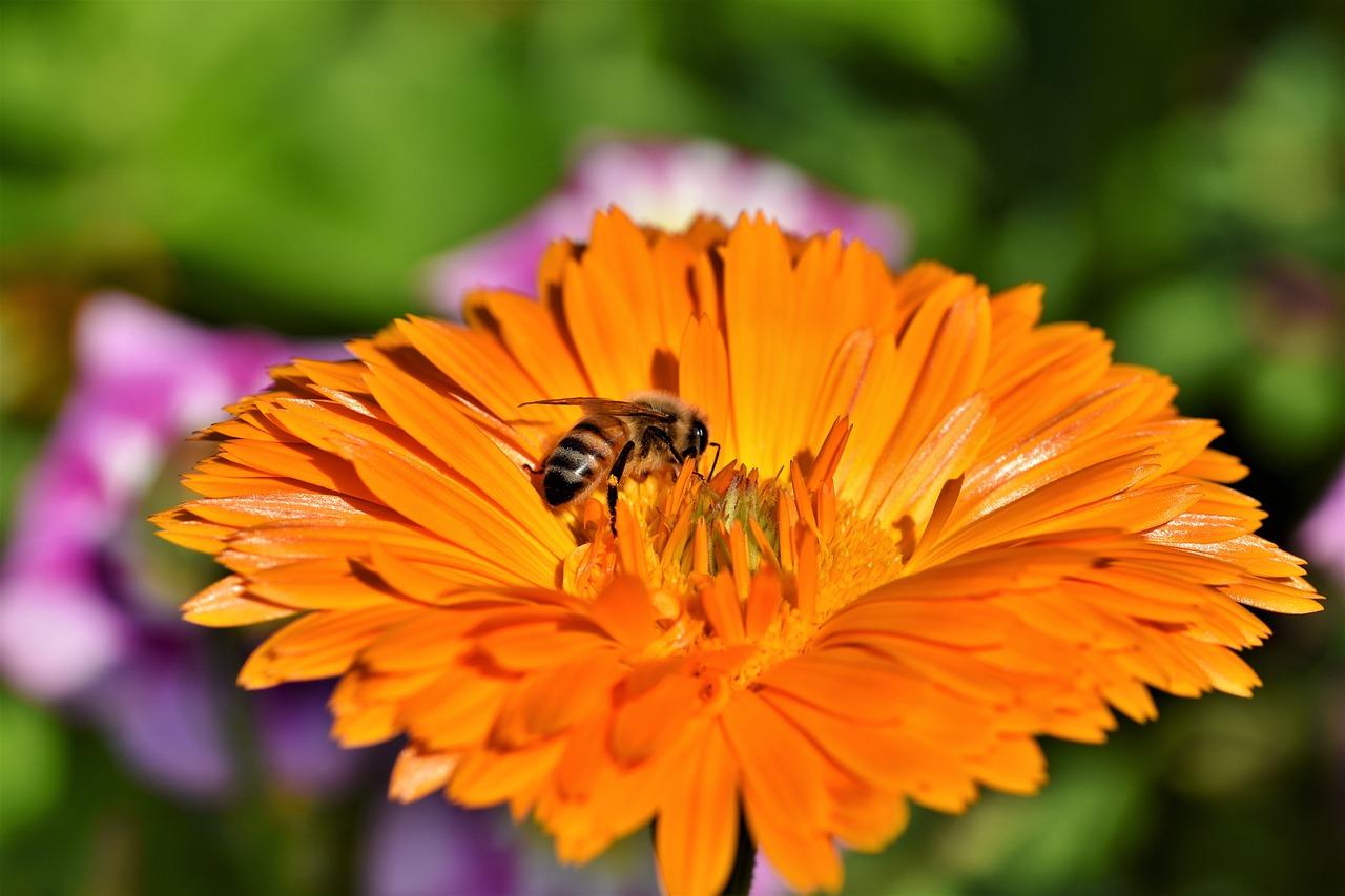 mimpi sarang lebah