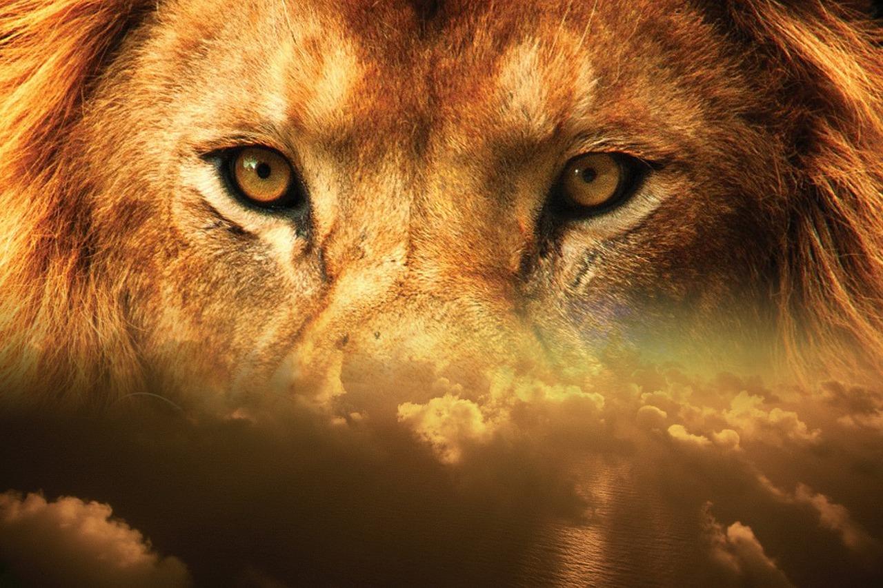 mimpi dikejar singa