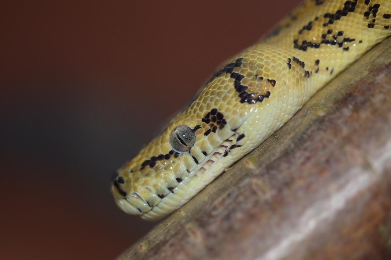 mimpi digigit ular kuning