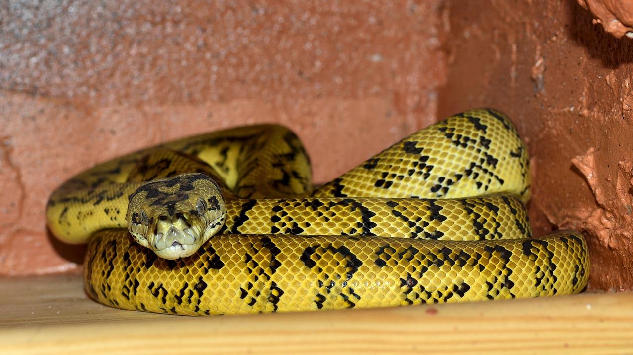 ular kuning lerek-lerek