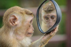 arti mimpi cermin