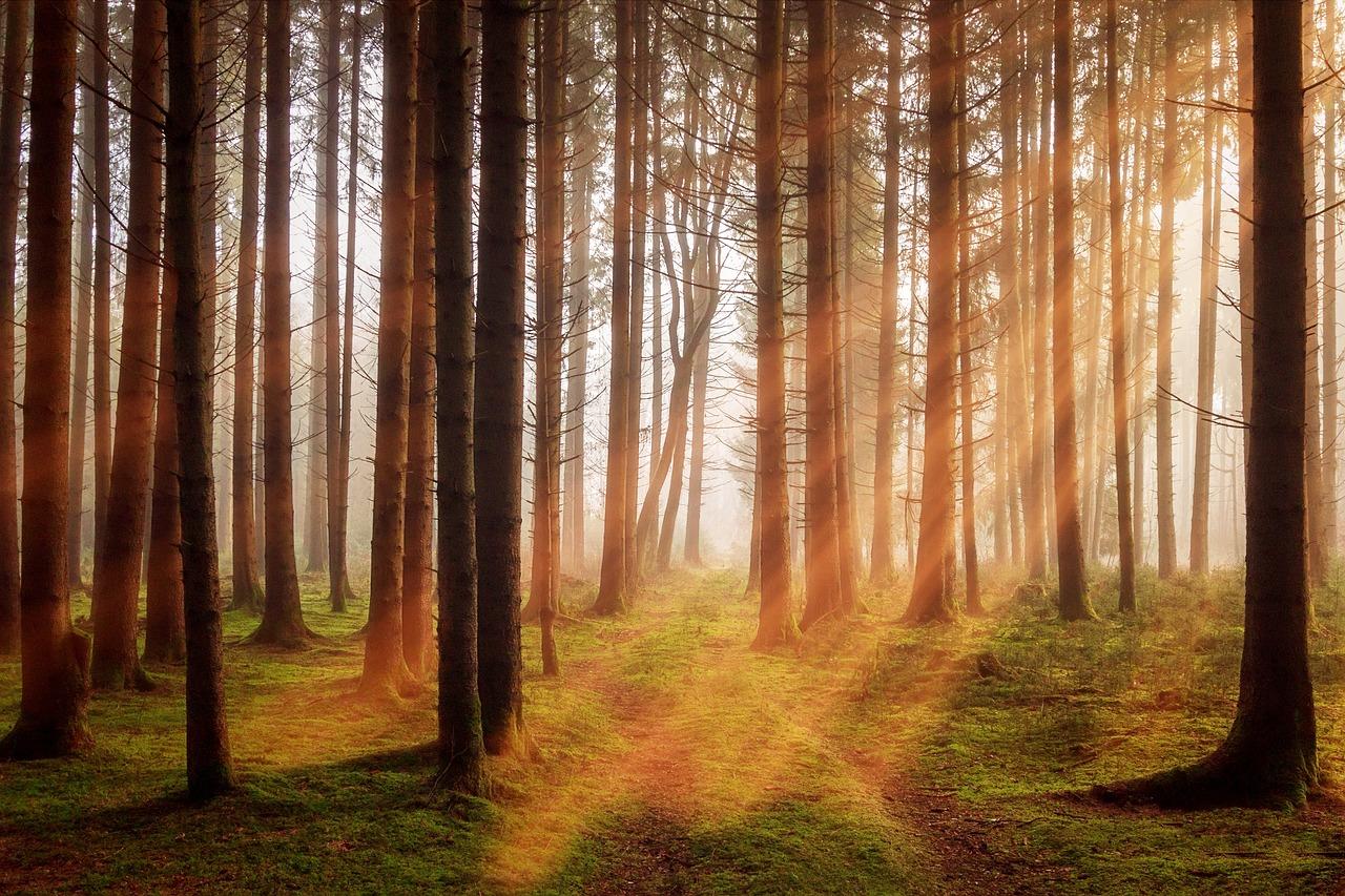 mimpi hutan terbakar