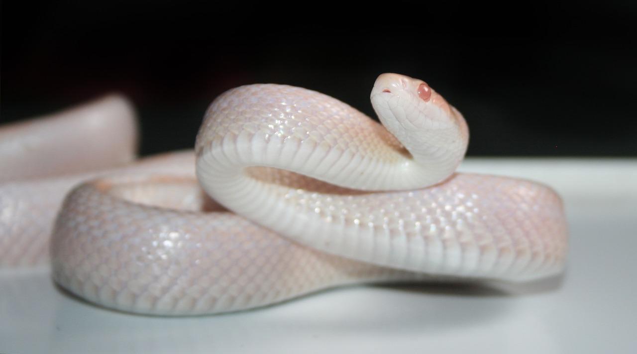 arti mimpi ular putih