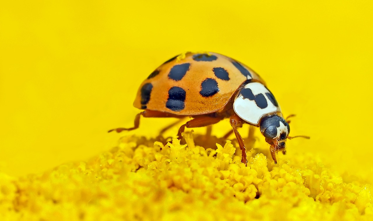 mimpi kumbang mati
