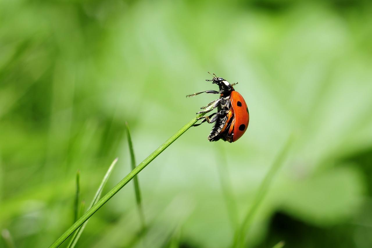 mimpi kumbang bertanduk