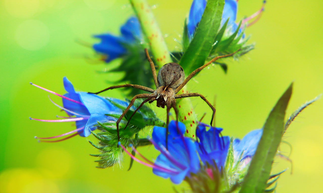 mimpi digigit laba laba di tangan