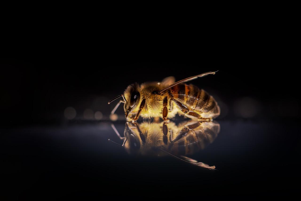 Arti Mimpi Serangga