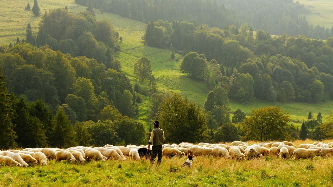 Arti Mimpi Domba