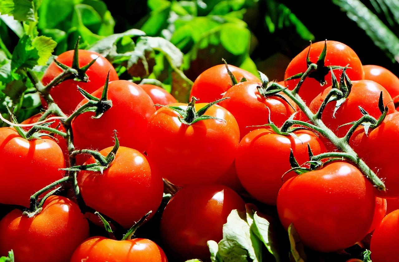 Arti Mimpi Tomat