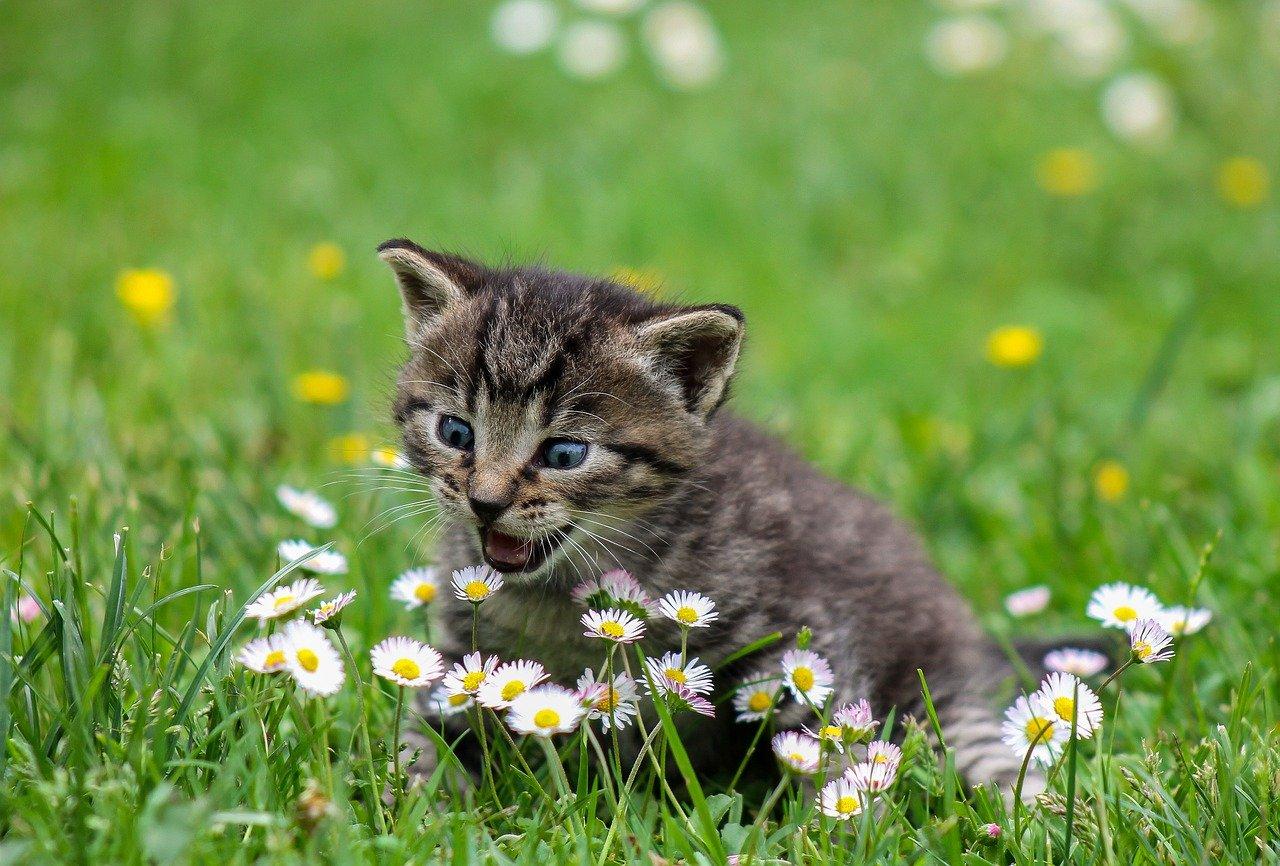 Arti Mimpi Anak Kucing