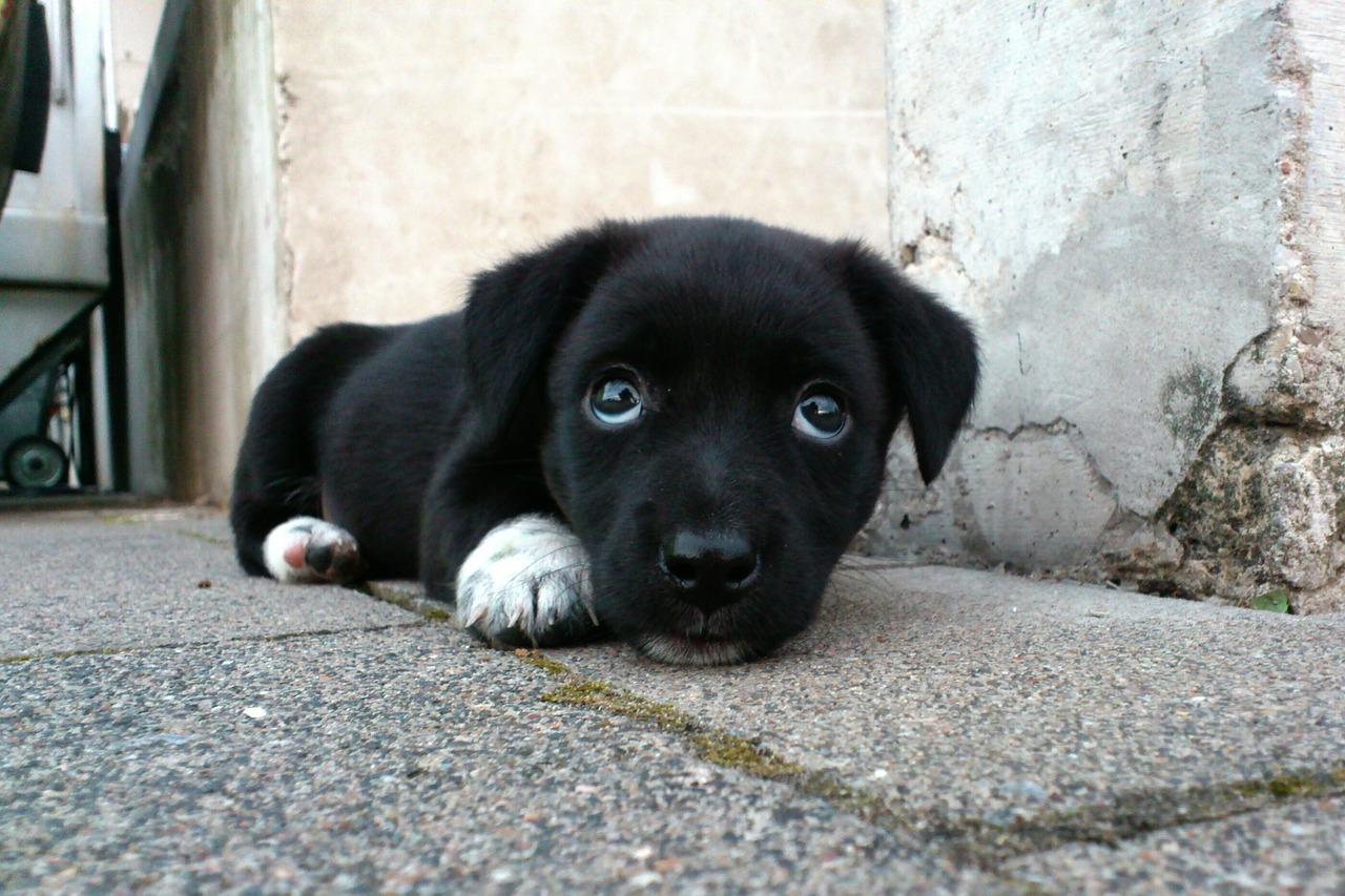Arti Mimpi Anjing Hitam
