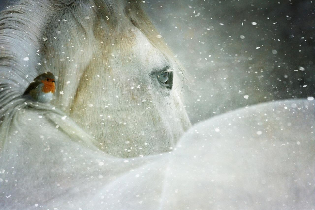 Arti Mimpi Kuda Putih